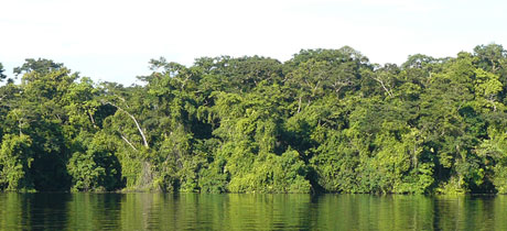 Tortuguero National Park Experts